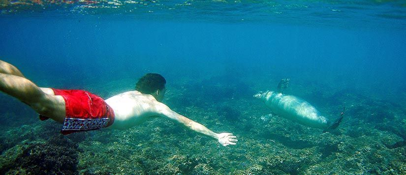 Thorsten Indra free diving at a reef, meeting a fellow body surfer. Photo: Erik Aeder